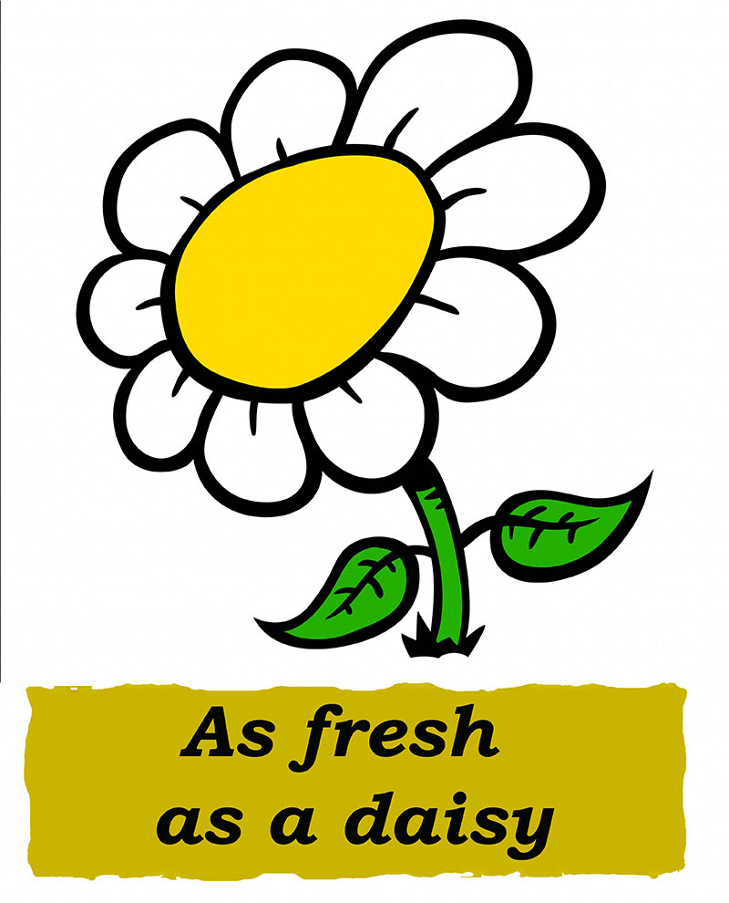Idioms: As fresh as a daisy