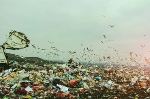 garbage truck on a landfill surrounded with seagulls