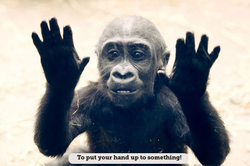Idioms: To put your hand up to something