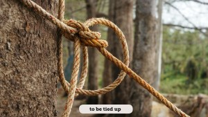 Rope with knot around brown tree trunk