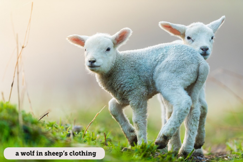 Idioms: A wolf in sheep's clothing