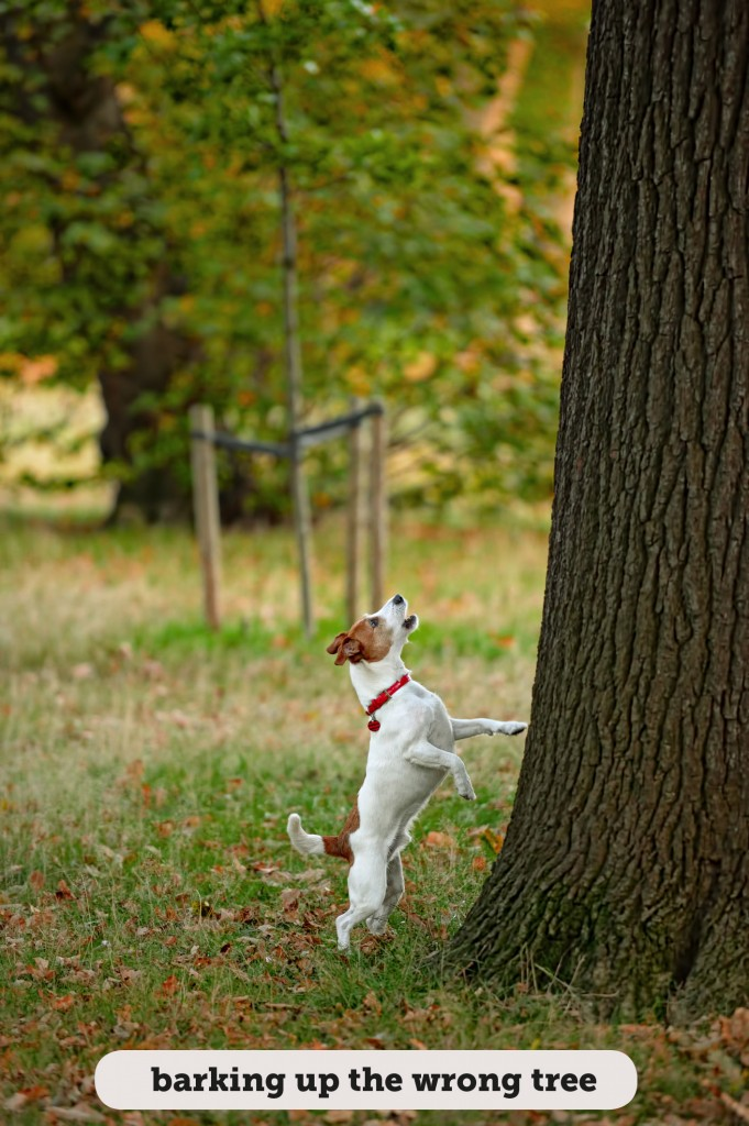 Idioms: Barking up the wrong tree