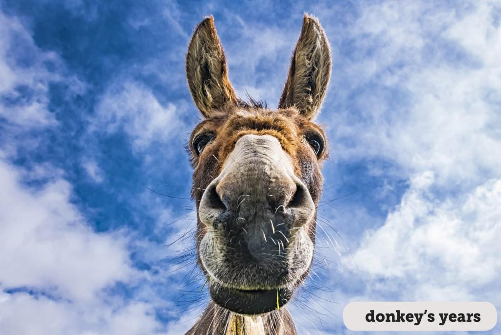 Idioms: Donkey's years