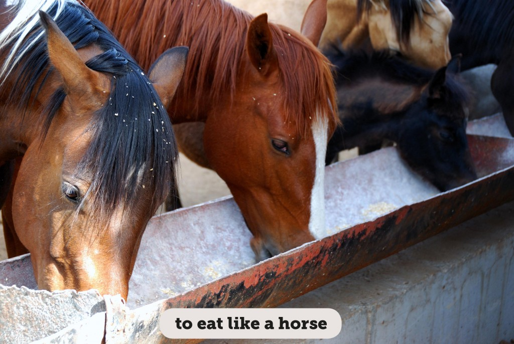 Idioms: To eat like a horse