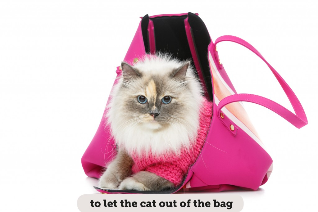 Idioms: To let the cat out of the bag