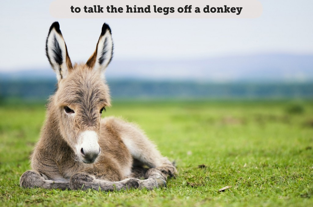 Idioms: To talk the hind legs off a donkey