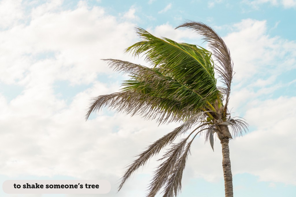Idioms: To shake someone's tree