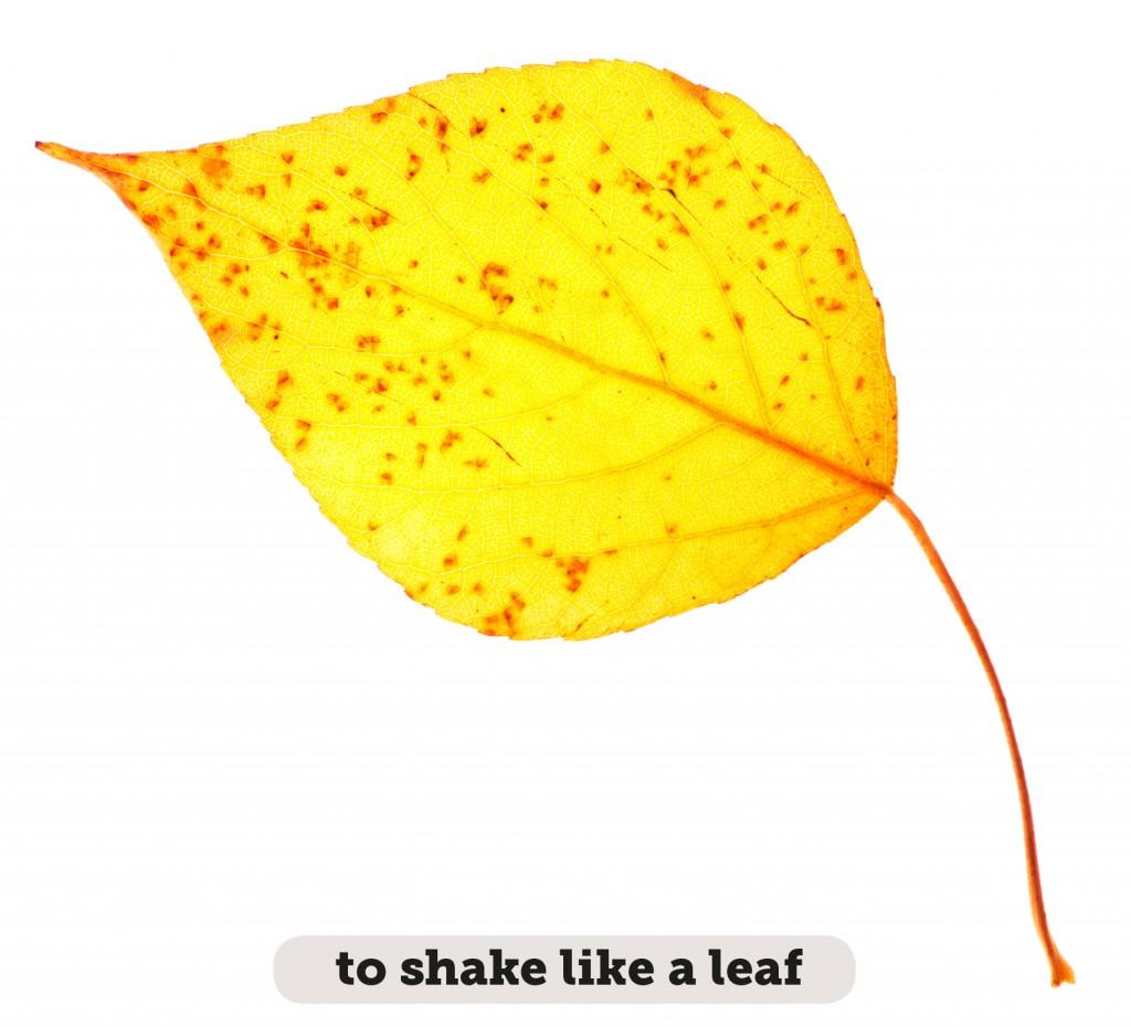 Idioms: To shake like a leaf