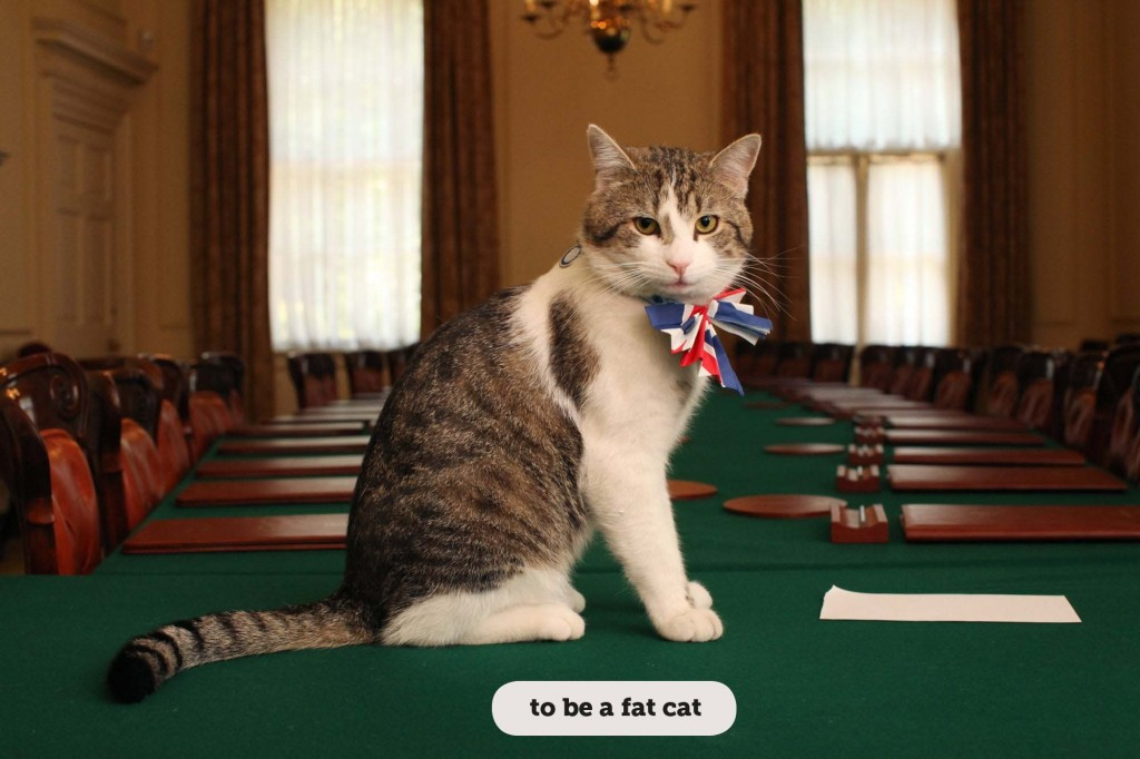IDIOMS: TO BE A FAT CAT